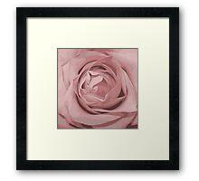 pink rose grunge stile Framed Print