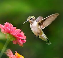 Hummingbird Sunrise by Christina Rollo