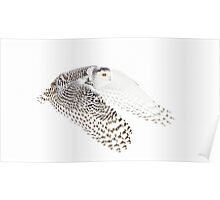 Wings Out - Snowy Owl Poster