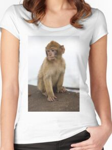 Barbary macaques in Gibraltar Women's Fitted Scoop T-Shirt