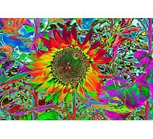 Sunflower: Chroma Fun Photographic Print
