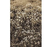 Meadow At Sunset Photographic Print