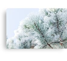 Hoar Frost Pine Branch Canvas Print