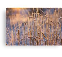 Frost Pipes Canvas Print
