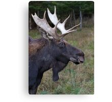 Canadian Moose Canvas Print