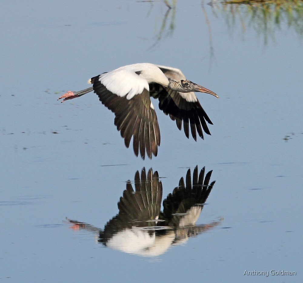 Endangered reflection! by jozi1