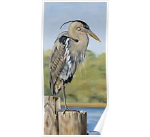 Great Blue Heron Standing Poster