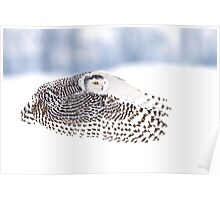Wings - Snowy Owls Poster
