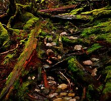 Cradle Mountain National Park by Imi Koetz