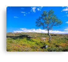 Landscape with a lonely tree Canvas Print