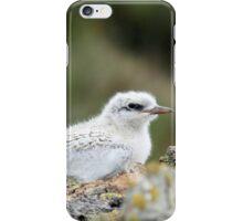 Juvenile Tern - Catlins - NZ iPhone Case/Skin