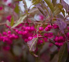 Autumn Fruits by artsandsoul