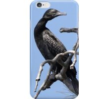 "Little Black Cormorant ~ ""Black on Blue""  iPhone Case/Skin"