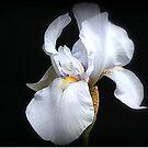 Pond Iris by naturelover
