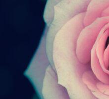 Faded Rose Sticker