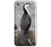 Little Pied Cormorant ~ .... Been here before .... iPhone Case/Skin