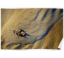 Dune & Leaf Poster