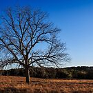Old Pecan tree by Colin Bester