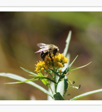 Bumble Bee Nectar  Sticker
