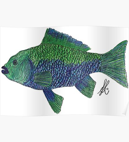 Green/Blue Fish Poster