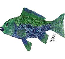 Green/Blue Fish Photographic Print