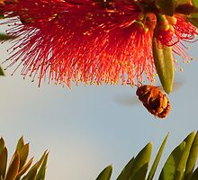BEE HAPPY!   *best viewed large!* :) by Nyakaya
