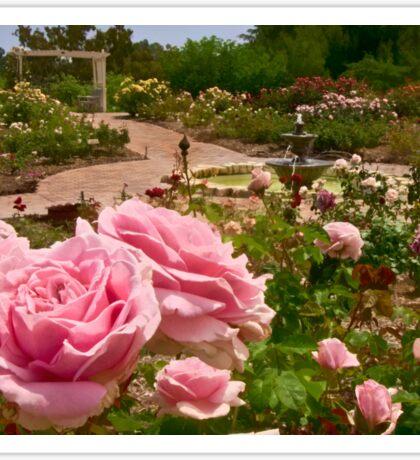Rose garden perspective Sticker