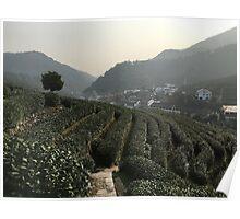 Longjing Tea Fields, Hangzhou, China Poster