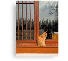West Lake Cat, Hangzhou, China Canvas Print