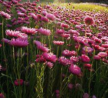 Spring Delight by Annette Blattman