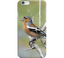 Chaffinch Song - Bluff - NZ iPhone Case/Skin