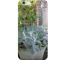 lovely but much to early no spring flowers for me  iPhone Case/Skin