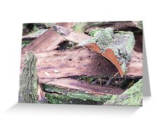 Old ragged bark, moss-covered Greeting Card