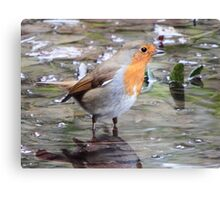 The Wading Robin Canvas Print