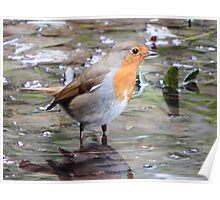 The Wading Robin Poster