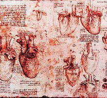 Heart And Its Blood Vessels. Leonardo Da Vinci, Anatomy Drawings Red by BulganLumini