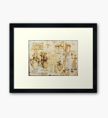 Heart And Its Blood Vessels Framed Print