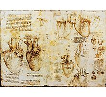 Heart And Its Blood Vessels Photographic Print