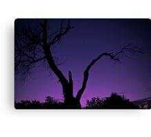 Harmers Tree Canvas Print