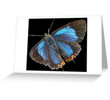 Butterfly 7-  in Bhutan Greeting Card