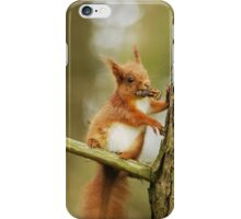 Red Squirrel - My Tree My Pine Cones! iPhone Case/Skin