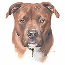 pitbull watercolor by Mike Theuer