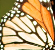 Monarch Butterfly close up  Sticker
