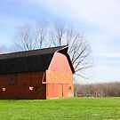 FIRST BARN THIS YEAR by Pauline Evans