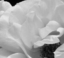 Noir Rose I Sticker