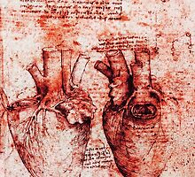 Heart And Its Blood Vessels. Leonardo Da Vinci,Anatomic Study, Red by BulganLumini