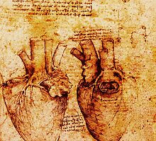 Heart And Its Blood Vessels. Leonardo Da Vinci,Anatomic Study,Brown by BulganLumini