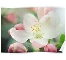 Pastel Blossoms Poster