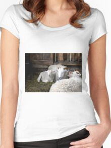 Baby Sheep Women's Fitted Scoop T-Shirt