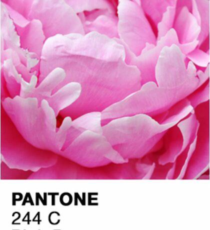Pantone Pink Peony Sticker